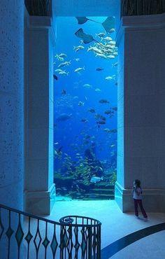 迪拜的海底世界,好清纯的蓝色 …