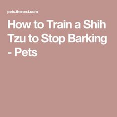 How to Train a Shih Tzu to Stop Barking - Pets