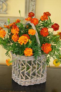 marigolds from a garden I love.