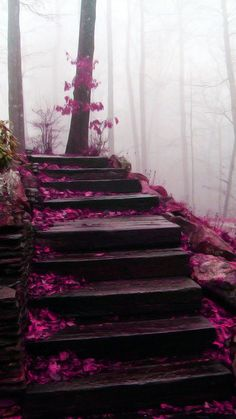 (via circusroad)  I don't know what sort of blossoms or leaves have fallen but I can smell the dampness in the air and the fragrant headiness of the woods. I want to walk into this photo.