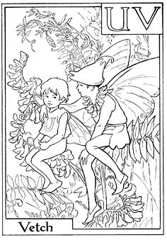 Letter V For Vetch Flower Fairy Coloring Page
