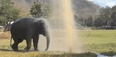 Elephant Keeps Breaking Sprinkler So She Can Play In The Water