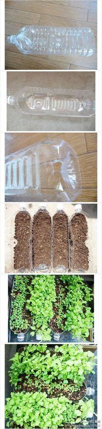 Semilleros hechos con botellas de plástico. Maceteros y floreros reciclados #manualidades #DIY #reciclaje