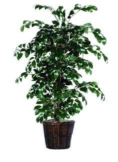 Vickerman AZTBU0740 Sakaki Bush, Dark Green, 4-Feet *** To view further for this item, visit the image link.