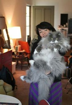 WOW, if you think you've seen large cats, you haven't looked at these 30 pictures