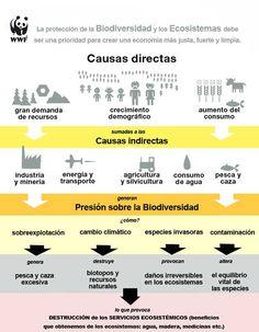 Ecosistemas 101 ejemplos y qué es un ecosistema