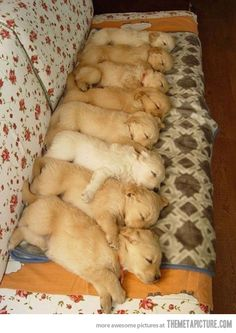 Puppy domino
