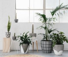 Black and white painted cement planters from Fox and Ramona.