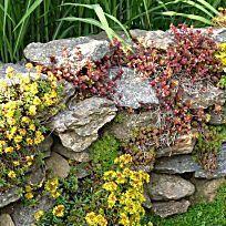 Natursteinmauern farbenfroh bepflanzen My Secret Garden, Stepping Stones, Outdoor Decor, Plants, Gardening, Garage, Tips, Patio, Sandstone Wall
