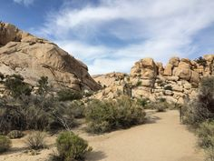 Joshua Tree National Park. Watch the entire episode here #monicagoes