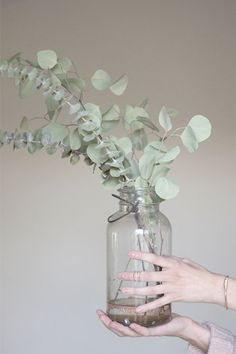 The Australian evergreen, eucalyptus has become the latest interior trend to blow­-up on Pinterest, with scores of trendsetters opting for the dainty stems to fill out pared back vases, as tabletop decorations and even in wreaths.  The real deal is fairly cheap to buy, smells incredible and lasts for ages, so opt for a few sprigs to spruce up your abode, or for a truly fuss­-free way to get the look go faux with The Olive Tree's unbelievably realistic foliage selection, which can be moulded…