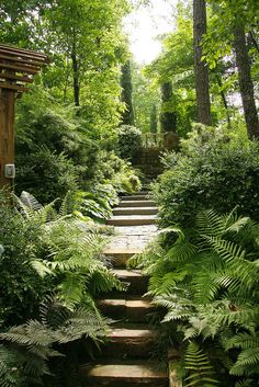 stepped path through a lush woodland garden at the home of Jim Scott, on Lake Martin, Alabama