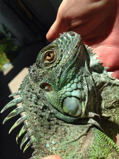 Lizard Skins Mini Machine Rose Chaud