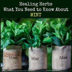 Mint is a prolific g Join Our Facebook Group