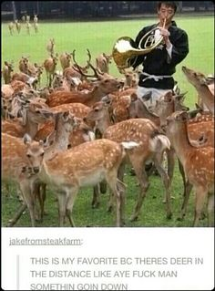 Makes all the deer come to the yard