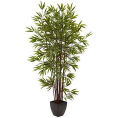 6' Bamboo Silk Tree w/Planter *** Check this awesome product by going to the link at the image.