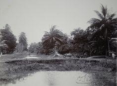 Een zoetwaterkanaal te Coronie, op de zandweg een rijtuig met man, vrouw en twee kinderen.   Datum: Locatie: Coronie, Suriname Vervaardiger: Inv. Nr.:  57/2-22 Fotoarchief Stichting Surinaams Museum