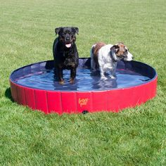 Pet Pool | Folding Dog Pool with Drain Plug for All Breeds – Frontpet.com