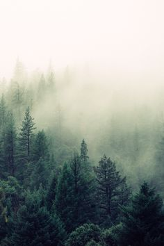 ✿ ❤ Fog in forest...Untitled | by Jay Mantri