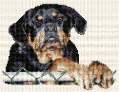 Kona rotweiller - cross stitch pattern designed by Marv Schier. Category: Dogs.