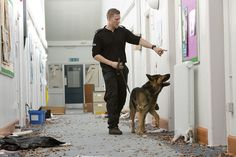 Banjo, a five-year-old member of Greater Manchester Police's Tactical Dog Unit, practices his searching skills during a training session in a disused building. A dog's sense of smell massively developed and they can search for the tiny amounts of a substance or track for many miles with little problem. They can find things that officers would never be able to and cover large areas in little time. www.gmp.police.uk