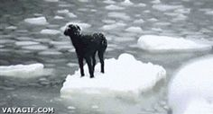 Dog Saved From Floating Ice Way to go guys!