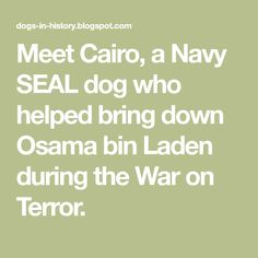 Meet Cairo, a Navy SEAL dog who helped bring down Osama bin Laden during the War on Terror. Black Hawk Helicopter, Belgian Malinois Dog, Navy Seals, Dog Names, Cairo, Bring It On, Meet, Malinois Dog, Hand Warmers