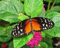 MTBobbins Photography - Orange and Black Butterfly