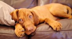 Is Your Pet Happy Home Alone?