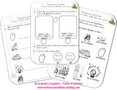 La Germination, French Classroom, Cycle, Mini, Bullet Journal, School, Montessori, Explorer, Plantation
