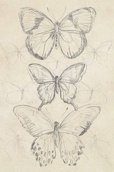 Butterfly Sketch, Butterfly Art, Vintage Butterfly, Bird Sketch, Butterfly Painting, How To Draw Butterfly, Butterfly Line Drawing, Cool Art Drawings, Art Drawings Sketches