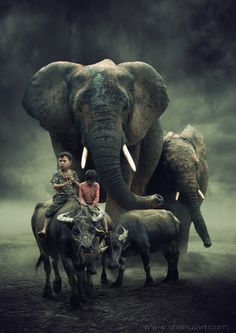 Wilde Freedom by Shahul Kollengode ~ ~ I had never realized that African Elephants can be tamed. Photo Elephant, Elephant Love, Elephant Art, African Elephant, Elephant Images, Beautiful Creatures, Animals Beautiful, Gravure Photo, Saint Cloud