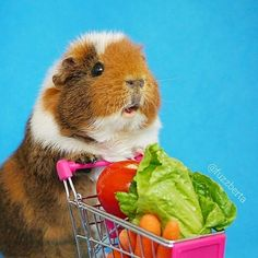 Donut furget the carrots Fuzz Fuzz! (Of course not they're at the bottom of the cart)