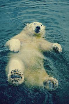 Like a polar bear in the Arctic