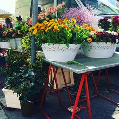 Naschmarkt, Vienna: Spent my morning looking at #flowers but ended up buying herbs for the balcony. It's officially #spring #balconyseason Vienna, Balcony, Planter Pots, Herbs, Seasons, Spring, Flowers, Stuff To Buy, Instagram