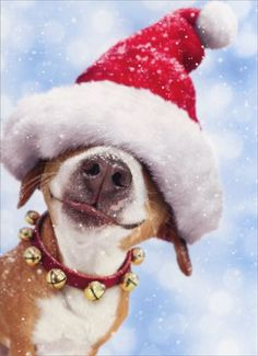 big dog with santa hat 10 boxed funny christmas cards by avanti press in home garden greeting cards party supply greeting cards invitations