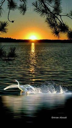 great names Beautiful nature Beautiful World, Beautiful Places, Beautiful Pictures, Beautiful Swan, Amazing Sunsets, Amazing Nature, Landscape Photography, Nature Photography, Photography Lighting