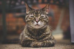 #petplace #cats #petbehavior #catbehavior #petinfo National Pet Day, Pet News, Veterinary Care, Cat Behavior, Catio, Old Dogs, Cat Health, Four Legged, Kittens Cutest