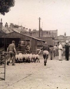 Driffield Cattle Market. Yorkshire. 1968. Glyn Overton.