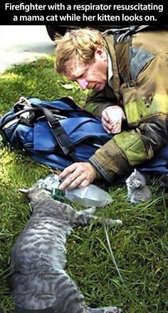 Helping mama. Firefighter helps mom cat.