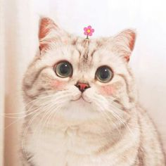 Why Are Cats So Cute, It's difficult to oppose the fun loving tricks and delicate little collections of cats. I Love Cats, Crazy Cats, Cool Cats, Chat Kawaii, Kawaii Cat, Cute Kittens, Cute Funny Animals, Cute Baby Animals, Cute Puppies