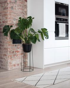 Menu Wire Plant Pot and Stand Green Plants, Potted Plants, Amazing Gardens, Beautiful Gardens, Outdoor Venues, Scandinavian Home, Exposed Brick, Diy Garden Decor, Brick Wall