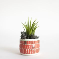 Tiny airplant holder (air plant included)  Erin Smith