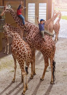 Photo Manipulation by Adrian Sommeling - In the Netherlands we have a Dutch child song about a boy who is called Dikkertje Dap and slides down the neck of a giraffe