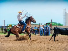 Work your dally with these tips from Spin To Win Rodeo Magazine Barrel Racing Saddles, Barrel Racing Horses, Horse Saddles, Horse Halters, Reining Horses, Breyer Horses, Vaquera Sexy, Team Roper, Western Pleasure Horses
