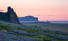 The coast of Southern Iceland as the sun rises over the lupines that cover the hills of V�k. (From: 12 GORGEOUS Images of the 'Golden Hour' Around the World)