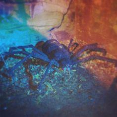 Massive spider!!!!