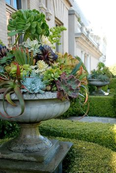 ABC Succulents: March 2012...entrance urns...crammed collection of succulents