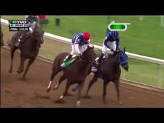 RACE REPLAY: 2015 Breeders' Cup Sprint | Runhappy is Houston's horse and this year's Breeder's Cup champion! Congratulations to the team, Edgar Prado, and Maria Borrell! | Houston TX | Gallery Furniture |
