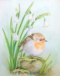 Original Watercolour 'Robin and Snowflakes' by morphocypris, via Flickr